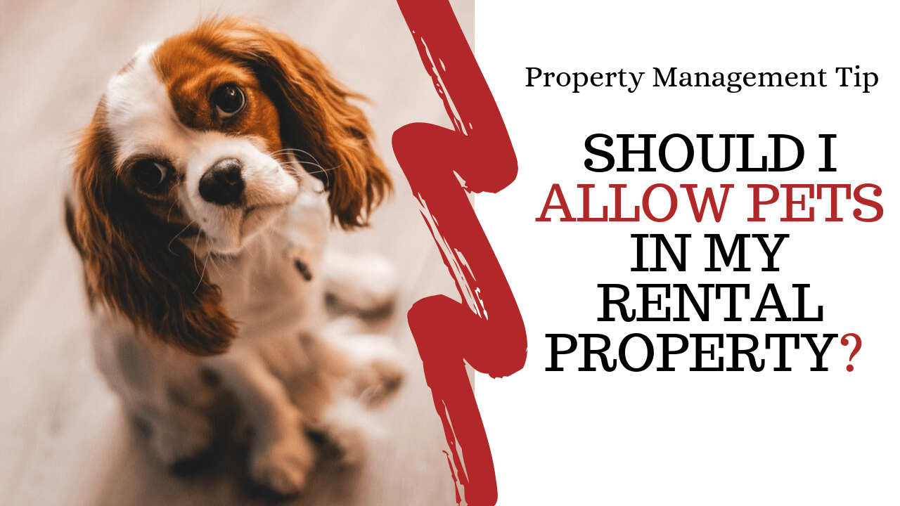 Should I Allow Pets In My Rental Property? | Lakewood, CO Property Management Tip - Article Banner